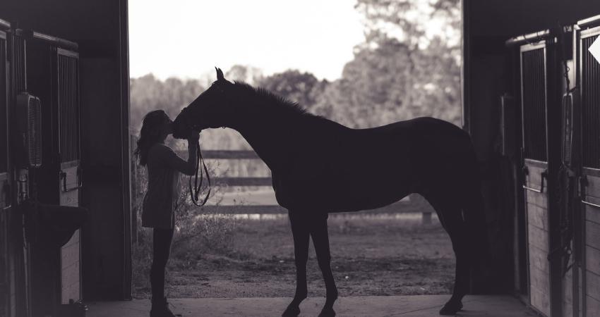 Rye Colorado Horseback Riding